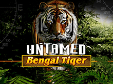 Игровой слот Untamed Bengal Tiger от разработчика Микрогейминг